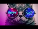 SERIOUS TRIPPY CAT MINIMAL TECHNO 2018 - Best Summer Mix