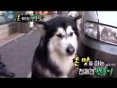 SBS animal show background music is BIGBANG's dirty cash