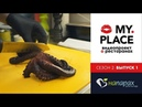 Готовим осьминога с шеф-поваром ресторана На Парах / Kiss My Place