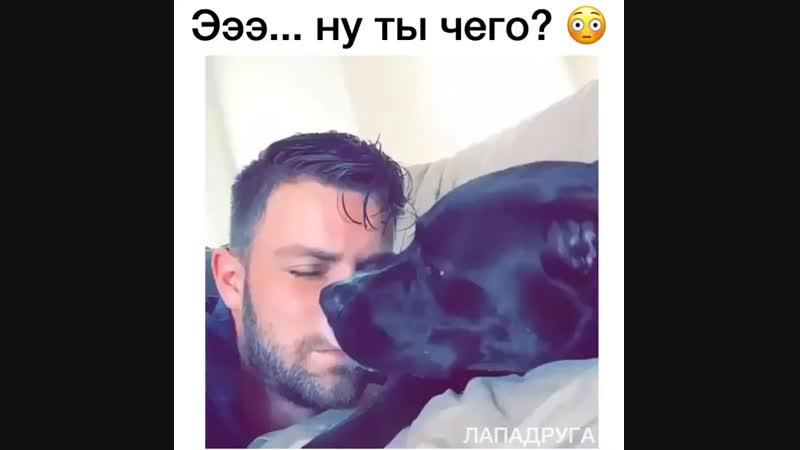 Собакен не понял, что за фигню сделал хозяин... 😂