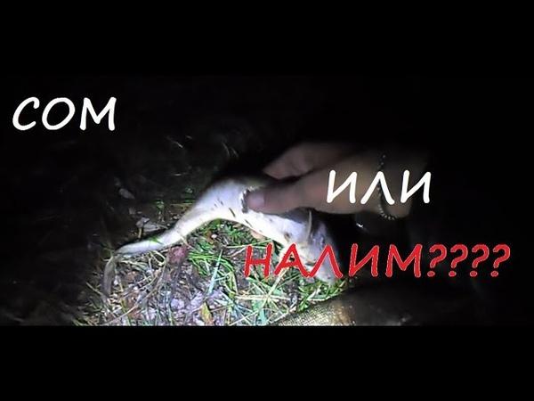 Ночная Рыбалка с лодки на острогу Поймали Леща Щуку Налима Голавчика