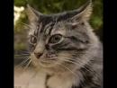 кот корышный😂
