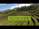 20-Azores, Portugal / Азорские острова- Tea plantation at Cha Gorreana, Maia, San Miguel
