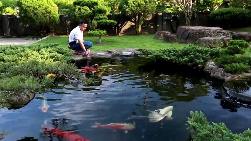 Hồ cá Koi kết hợp vườn Nhật đẹp hút hồn