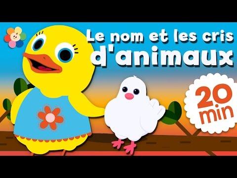 Abeille, perroquet, chouette et bien d'autres !   Dessins animés pour enfants par BabyFirst