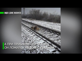 Самый верный друг: пёс два дня ложился под поезд, охраняя раненную на рельсах собаку