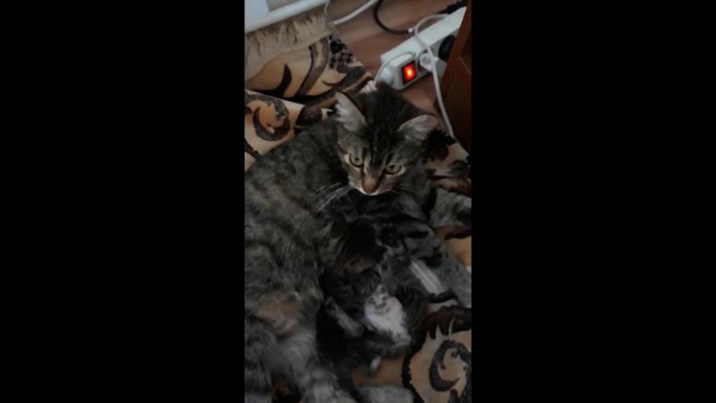 Адлер. Котята в Добрые руки.) Кошки слышат глазами.