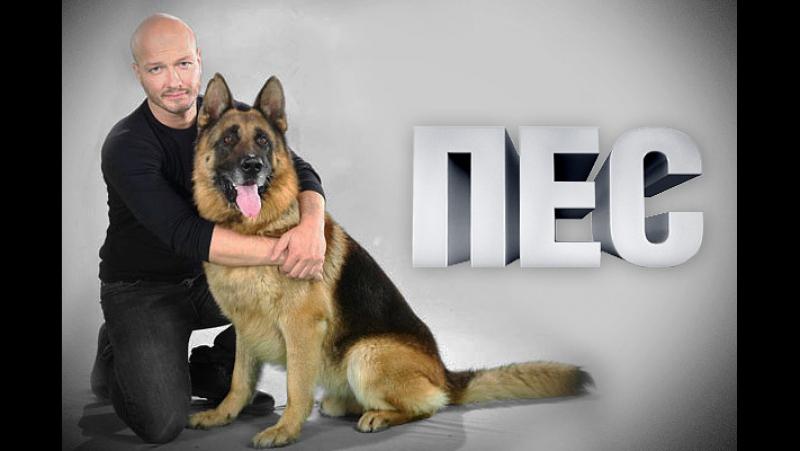 Пёс 2 сезон 10 серия ( 2015-2016 года )