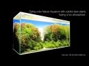 [ADAview] Spring color Nature Aquarium with colorful stem plants having a fun atmosphere