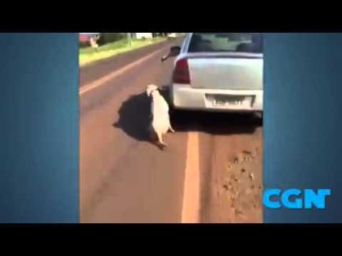 Crueldade: Cachorro é arrastado por carro placa ADM 5671 em Realeza. PR