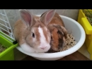 Кролики обожаю их 😘😍😘😍😝😜😋