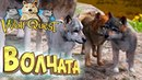 РАСТИМ ВОЛЧАТ - WOLFQUEST 3