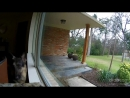 Dog's owner sees dog barking on drop cam and tells it to stop