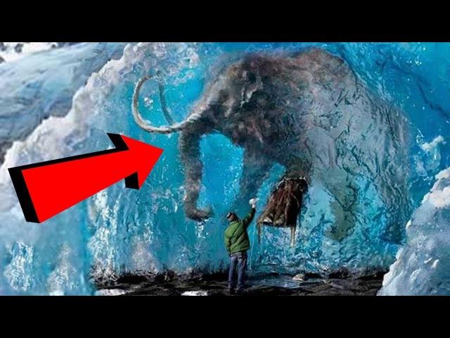10 ЖИВОТНЫХ, замороженых ВО ВРЕМЕНИ (ТАЕТ ЛЕД)