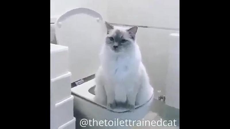 Кошка пописала в унитаз и сама смыла.