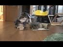 Fat cat does not fit in box · coub, коуб