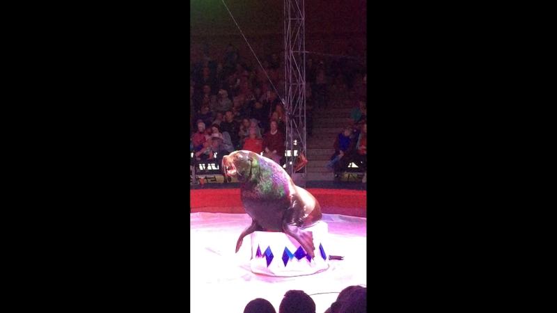 Вечерний Цирк Владимир