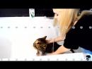 Как мыть кота Всё получится даже со злыми кошками