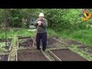 Посадка свеклы Заслуженный агроном Корнилов советует часть 1