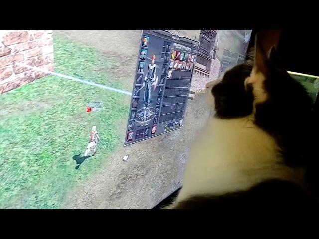 Кошка играет в онлайн игру Масяня смотрит за Lineage 2