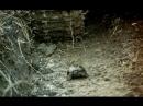 «Внимание, черепаха!» (1970) — Там же Ракета!