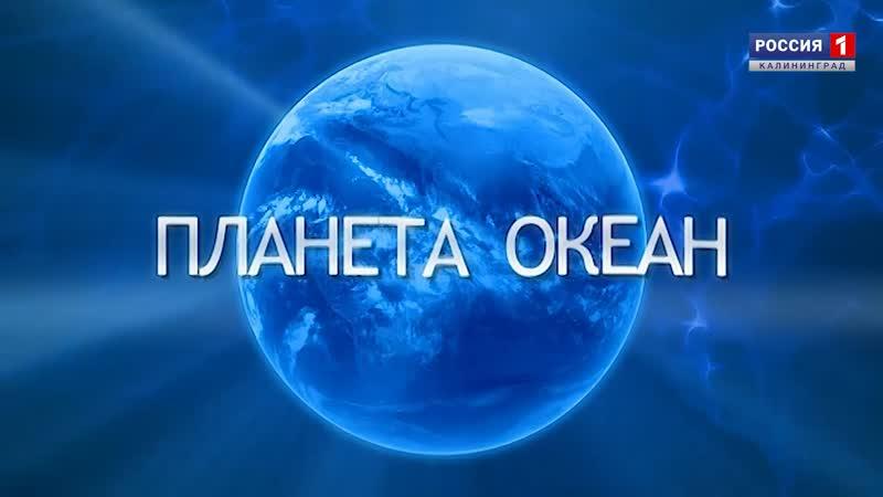 Новый выпуск программы «Планета Океан» (от 19.04.2019)