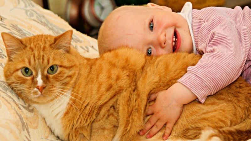 Рыжая кошка нашла подкидыша возле дома Малыш лежал в свертке под забором и шевелился
