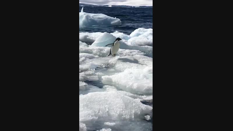 Многие поймут: Ты, когда на улице оттепель ( Антарктида, январь 2019 года).