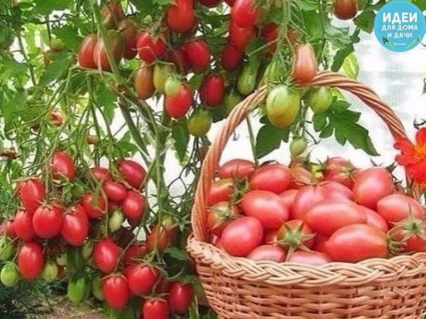 Чтобы было больше помидоров, чем зелени нa них!