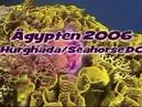 Ägypten 2006 Hurghada Shab El Erg Tauchen Red Sea Dolphin Reef