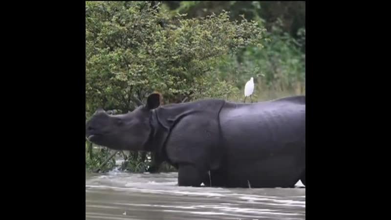 Наводнение в штате Ассам Индия июль 2019