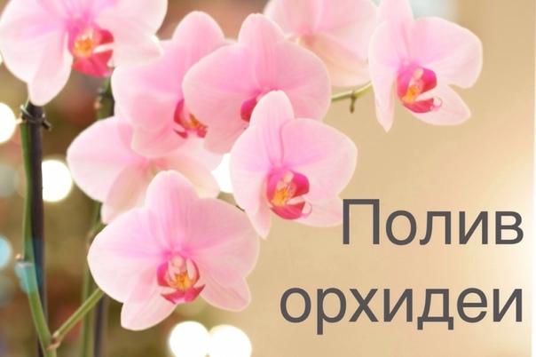 Как поливать орхидею в домашних условиях  советы флориста