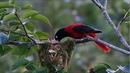 Những chú chim đẹp mê hồn ngoài thiên nhiên hoang dã ( siêu tầm )