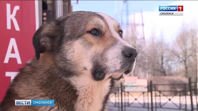 Сторожу смоленской администрации потребовалась помощь ветеринара