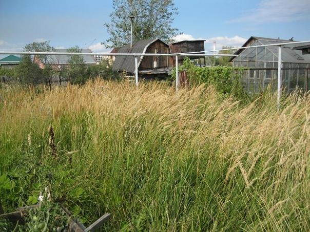Сорняк не убрал землю потерял Минэкономразвития РФ предложило изымать земельные участки за нарушение пожарных требований. Об этом говорится на федеральном портале проектов нормативных правовых