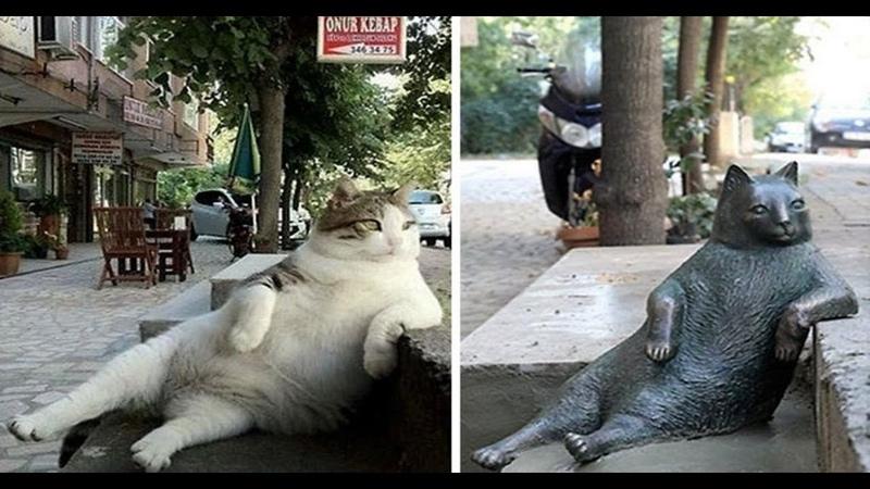 Я РЖАЛ ПОЛ ЧАСА Смешные Коты и Собаки ПРИКОЛЫ С ЖИВОТНЫМИ Cute Cats 122
