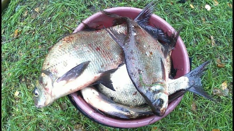 Рыбалка на донки оснастка донок ловим леща бешеный клёв рыбалка в дождь на природу с семьёй