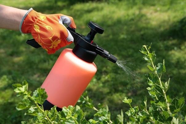 Безопасная защита растений от болезней и вредителей в августе.