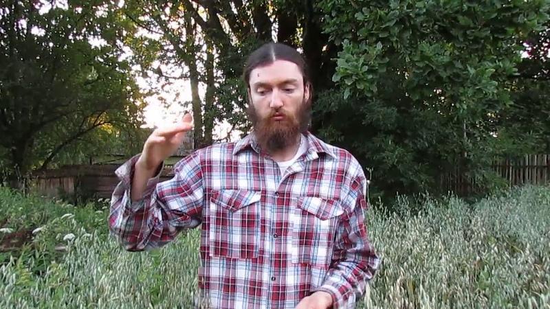 Первородные сорта злаковых (пшеница, рожь, овес, ячмень)
