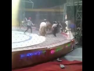 Один день из цирка