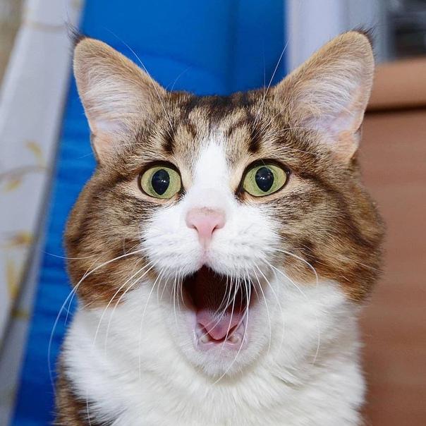 В Ульяновской области разрешают охоту на кошек и собак. Министерство природы области подготовило законопроект, согласно которому будет разрешена охота на кошек, собак, ворон и бакланов. Причиной
