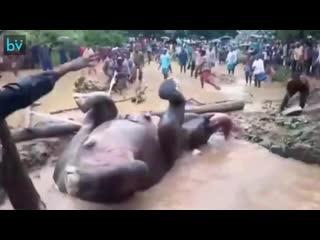 В Индии люди помогли слону выбраться из затопленной ямы