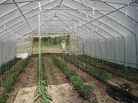 Парники и теплицы Как подстраховаться от капризов природы и собрать богатый урожайВ современной теплице можно создать для растений практически идеальные условия.Только на первый взгляд кажется,