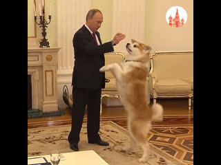 Хобби и увлечения Владимира Путина