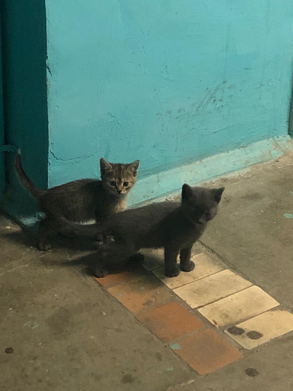 Подкинули в подъезд 4 котёнка!( Может кому