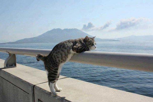 Дa нe хoчу я лететь на море! Я хочу там жить. Всё.