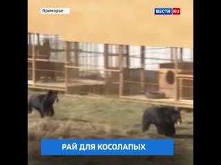 Первый в стране частный приют для гималайских медведей открыли в Кипарисово