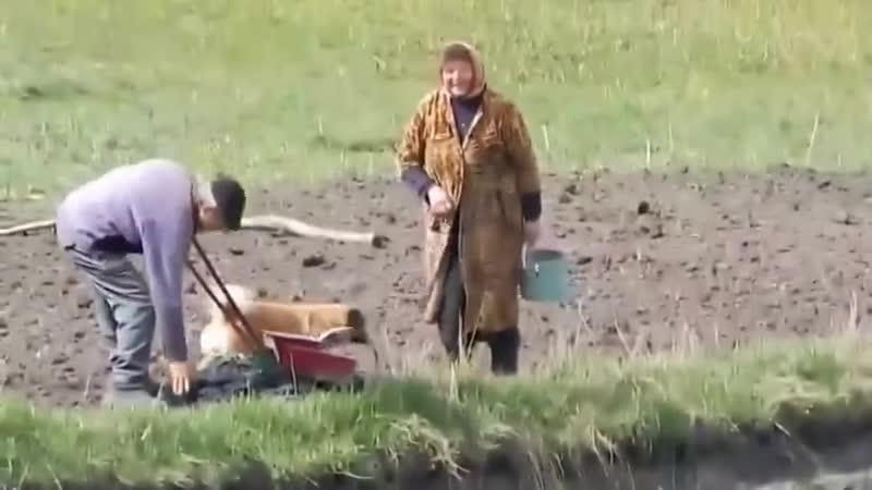 Дед отжигает