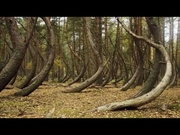 Сбой в Матрице кривой лес в Рязанской области