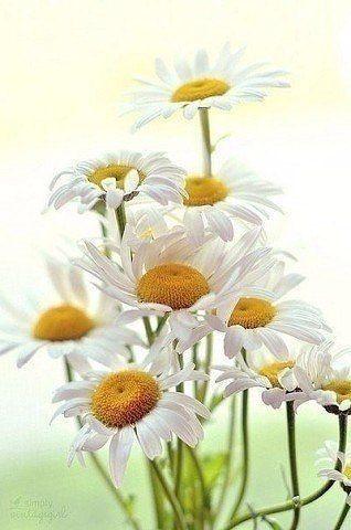 Хорошее настроение - единственный вирус, который радостно подхватить! Доброе утро!